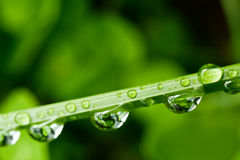 Wässern Sie Tropfen auf Blatt des Grases Lizenzfreies Stockfoto