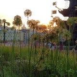 Wässern Sie Tropfen auf dem Gras und den Blumen Museon-Parks Moskaus lizenzfreie stockfotos