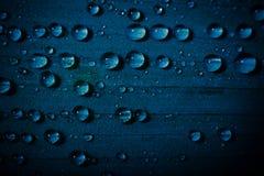 Wässern Sie Tropfen auf frischem blauem Blatt mit unscharfem Hintergrund Stockbild