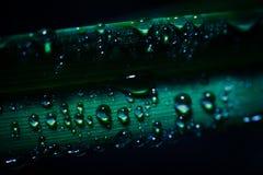 Wässern Sie Tropfen auf frischem grünem Blatt mit unscharfem Hintergrund Stockfoto