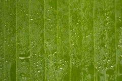 Wässern Sie Tropfen auf grünem Bananenblatt mit Linien Lizenzfreies Stockbild