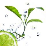 Wässern Sie Tropfen auf Kalk mit grünen Blättern Lizenzfreie Stockbilder