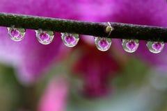 Wässern Sie Tropfen mit reflektierter Orchideen-Blume, Makro Lizenzfreie Stockfotos