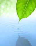 Wässern Sie Tropfen und Blatt mit Kräuselung und Reflexion Stockbilder