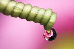 Wässern Sie Tropfen und haben Sie Blume nach innen Lizenzfreie Stockfotografie