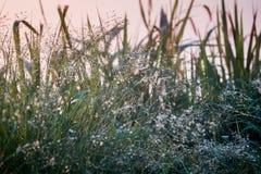 Wässern Sie Tropfen unter Grasblumenterrassen auf Hochländern mit Sonnenuntergang Lizenzfreies Stockbild