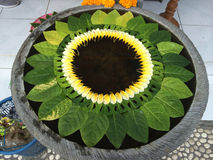 Wässern Sie vask mit sich hin- und herbewegenden Blume deconations im ubud, Bali, Indonesien Lizenzfreies Stockbild