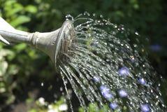 Wässernblumen Stockfotografie
