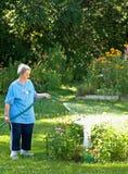 Wässernblumen der Frau Stockbilder