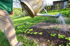 Wässernblumenbetten des Gärtners Lizenzfreies Stockfoto