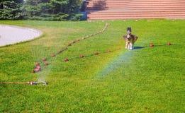 Wässernde grüne Rasenberieselungsanlage von Lizenzfreies Stockbild