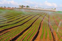 Wässernplantlet Lizenzfreie Stockfotografie