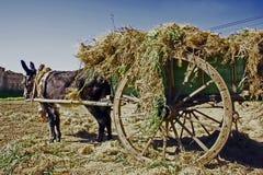 wózek jest pełna trawy. Zdjęcie Royalty Free