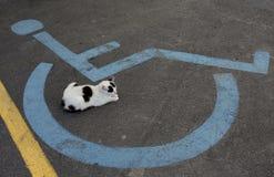 Wózka inwalidzkiego foru znak i sypialny kot zdjęcie royalty free