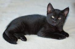 10-wöchig - altes schwarzes Kätzchen auf Decke Stockbild