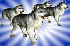 Wölfe (Wolfs) Stockfoto