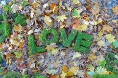 Wörter LIEBE auf Herbsthintergrund Stockfotografie