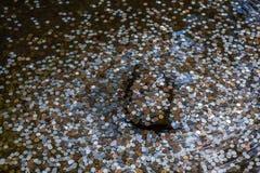 Wünschenswertes foutain, Kyoto, Japan Lizenzfreie Stockfotos
