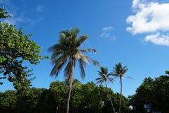 Würdevolle Palmen und Grün am tropischen Strand lizenzfreies stockbild