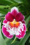 Würdevolle tropische Blume stockfoto