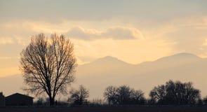 Würdevoller bloßer Baum im einfachen gelben Sonnenuntergang Lizenzfreies Stockbild