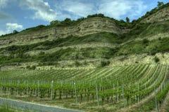 Würzburg Tyskland - vingårdrockface Arkivbilder