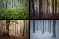 Würzen Sie Frühlingssommer-Herbstwinter im Wald mit Nebel Lizenzfreies Stockfoto