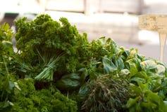 Würzige Grüns Stockfoto