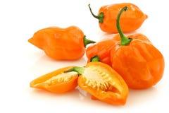 Würziges heißes adjuma peppers (spanischer Pfeffer chinense) Stockfotografie