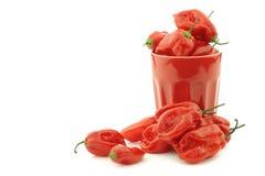 Würziges heißes rotes adjuma pfeffert in einem roten keramischen Becher Lizenzfreies Stockbild
