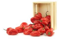 Würziges heißes rotes adjuma pfeffert in einer Holzkiste Stockbilder