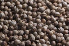 Würzkoriander würzt Würzkoriander-Korn coriandre Lizenzfreies Stockbild