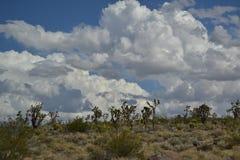 Wüste Lizenzfreie Stockfotos