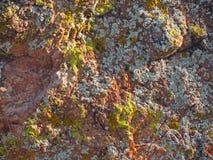 Wüste Boulder mit Flechte stockfotografie