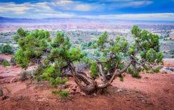 Wüste Bush am Mittag Lizenzfreie Stockfotografie