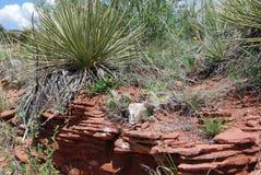Wüste in Colorado Stockfotografie