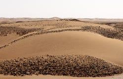 Wüste Hamada du Draa Marokko Stockfoto