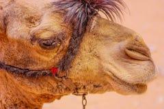 Wüste im Ägypten lizenzfreie abbildung