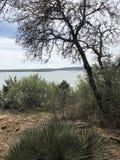 Wüste mit Bäumen und Bürste Stockfoto