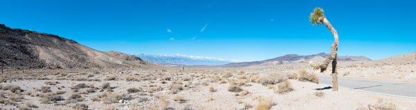 Wüste mit einem Baum Lizenzfreies Stockbild