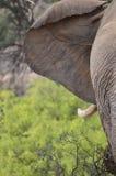Wüste passte Elefanten an Lizenzfreie Stockfotografie