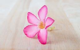 Wüste Rose Flowers, hölzerner Hintergrund Lizenzfreie Stockfotos