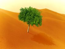 Wüste und Baum Stockfoto