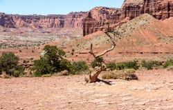 Wüste und Berge lizenzfreie stockbilder