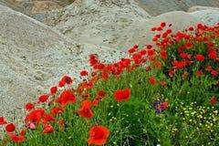 Wüste und Blumen 1 Stockfotos