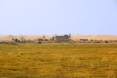 Wüste und Wiese Stockfotos