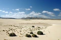 Wüste von Fuerteventura im Bereich Corallejo, Spanien Stockfotografie