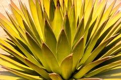 Wüsten-abstrakter Sonnendurchbruch Lizenzfreies Stockfoto