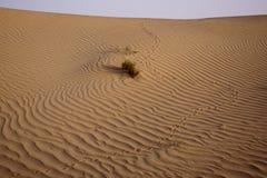 Wüsten-Bahnen stockfotos
