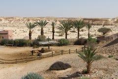 Wüsten-Erholungsort Stockbild
